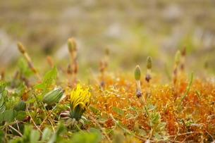 春の訪れの写真素材 [FYI00397121]