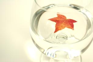秋を味わうの写真素材 [FYI00397209]