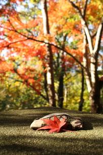 紅葉日和の写真素材 [FYI00397248]