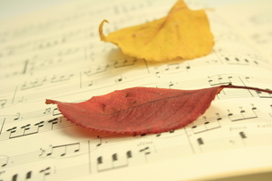 枯れ葉のメロディーの写真素材 [FYI00397257]