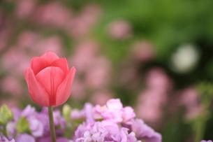 春色花壇の写真素材 [FYI00397413]