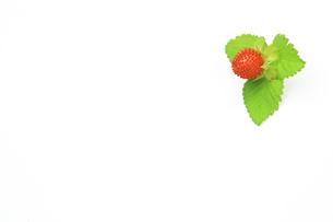 ヘビイチゴの写真素材 [FYI00397585]