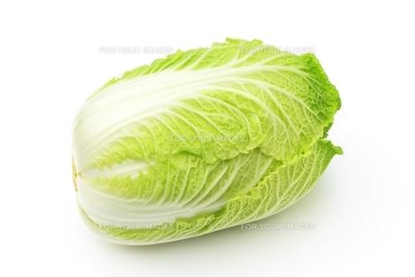白菜の写真素材 [FYI00397953]
