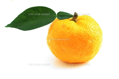 柚子の写真素材 [FYI00398001]