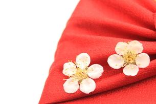 梅の花の写真素材 [FYI00398048]