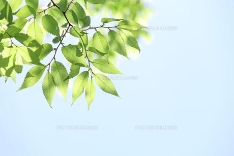 新緑の季節の素材 [FYI00398073]