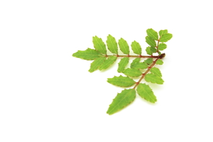 木の芽の写真素材 [FYI00398090]