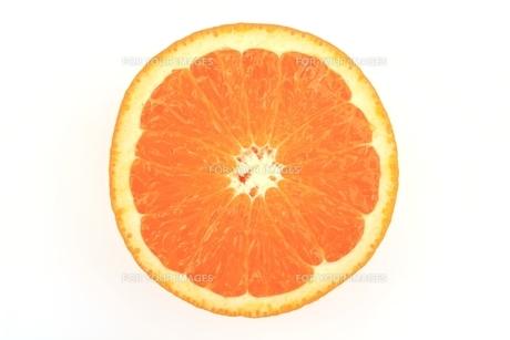 清見オレンジの写真素材 [FYI00398201]