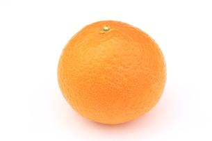 清見オレンジの写真素材 [FYI00398207]