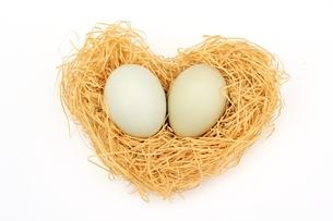アローカナの卵の写真素材 [FYI00398244]