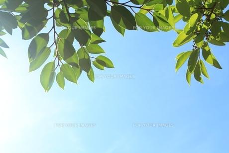 猛暑の写真素材 [FYI00398306]