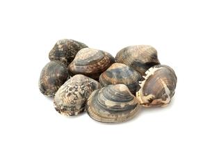 アサリ貝の写真素材 [FYI00398692]