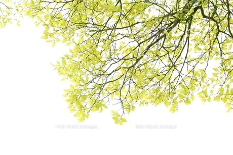 新緑の素材 [FYI00398810]