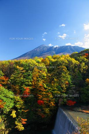 岩手山と紅葉の素材 [FYI00399118]