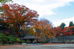 公園と紅葉の素材 [FYI00399151]