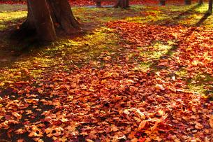 夕暮れの秋の公園の写真素材 [FYI00399162]