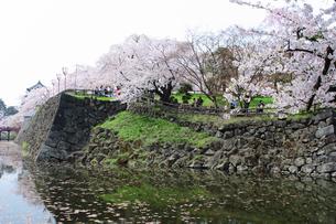 石垣と桜の素材 [FYI00399175]