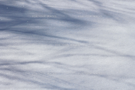 雪原の光と影の素材 [FYI00399579]