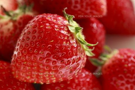 苺の素材 [FYI00399788]