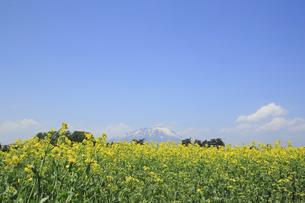 菜の花畑と岩手山の写真素材 [FYI00400046]