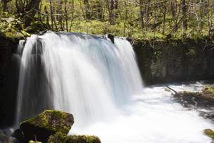奥入瀬渓流の滝の写真素材 [FYI00400079]