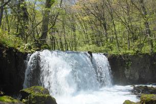 奥入瀬渓流の滝の写真素材 [FYI00400086]