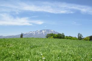 岩手山と草原の写真素材 [FYI00400123]