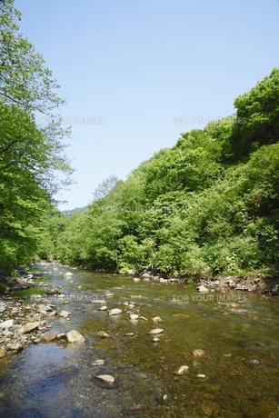 白神山地の渓流の素材 [FYI00400131]