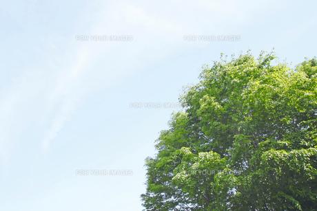新緑と青空の写真素材 [FYI00400133]