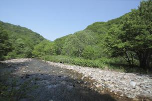 白神山地の渓流の素材 [FYI00400136]