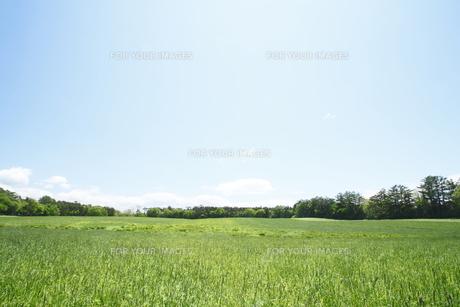 草原と青空の素材 [FYI00400155]