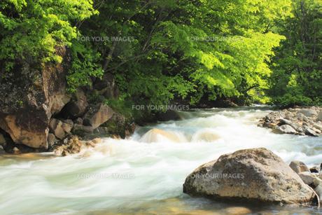 新緑の松川渓谷の素材 [FYI00400213]