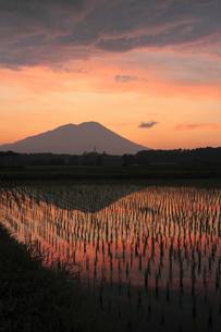 夕暮れの岩手山と田園風景の写真素材 [FYI00400257]