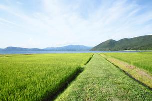 田沢湖と田園風景の素材 [FYI00400338]
