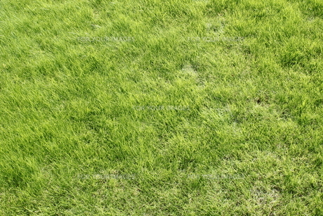 芝生の写真素材 [FYI00400442]