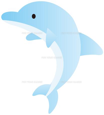 イルカの写真素材 [FYI00400712]
