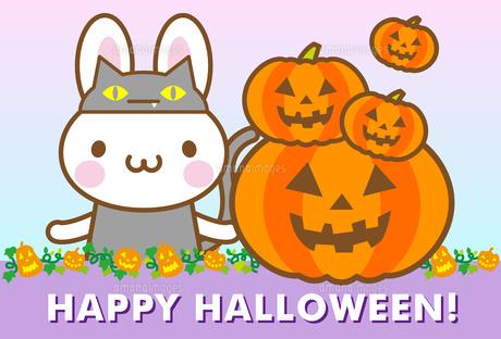 うさぎ ハロウィン 黒猫 かぼちゃの写真素材 [FYI00400723]