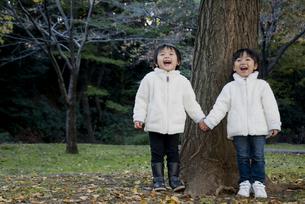 銀杏の木の下で手をつなぐ子供たちの写真素材 [FYI00403676]