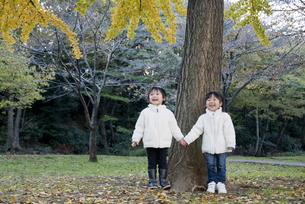 銀杏の木の下で手をつなぐ子供たちの写真素材 [FYI00403684]