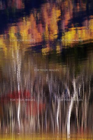 戸隠鏡池に写る紅葉の林の写真素材 [FYI00403700]
