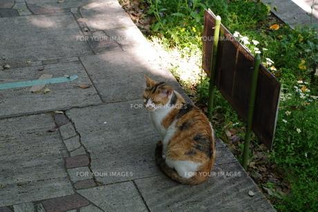 猫の写真素材 [FYI00404156]