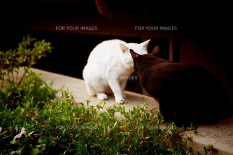 猫/kissの写真素材 [FYI00404209]