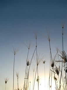 秋の風景の写真素材 [FYI00404280]
