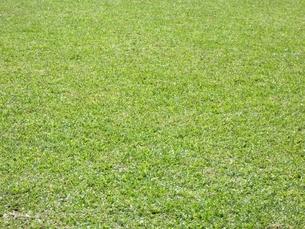 芝生の素材 [FYI00404284]