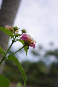 野花の写真素材 [FYI00404305]