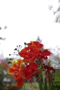 花の写真素材 [FYI00404306]
