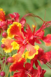花の写真素材 [FYI00404318]