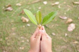 葉を持つ手の写真素材 [FYI00404349]