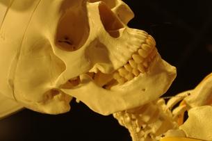 骨の写真素材 [FYI00404363]