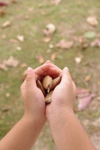 種を持つ手の写真素材 [FYI00404367]
